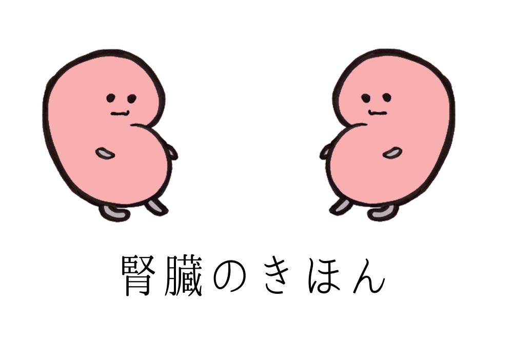 腎臓が二つ向かい合っている画像 腎臓の基本 腎臓に良い食べ物と食習慣 腎臓に良い食べ物 腎臓に良